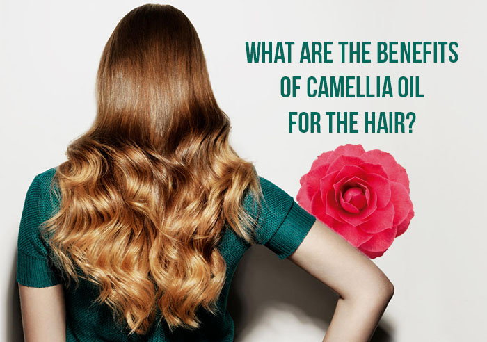 The benefits of camellia oil for the hair