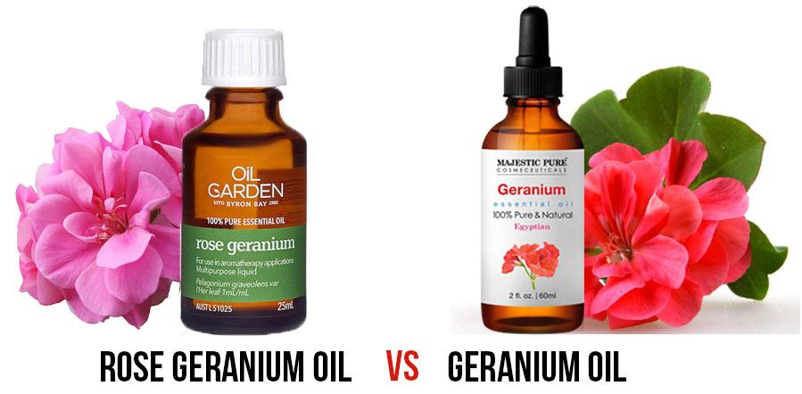 geranium oil versus rose geranium oil